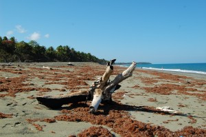 Playa Duaba Baracoa, Duaba Strand Baracoa, Duaba Beach Baracoa